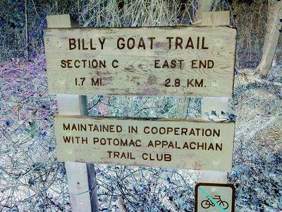 Billygoat2