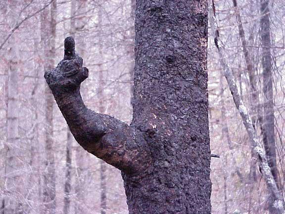 Tree_flipping_bird